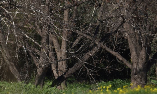 ilandrones הפקת סרטוני טבע